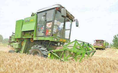 奇瑞重工生产的谷王tb60联合收割机正开足马力抢收小麦 本报高清图片