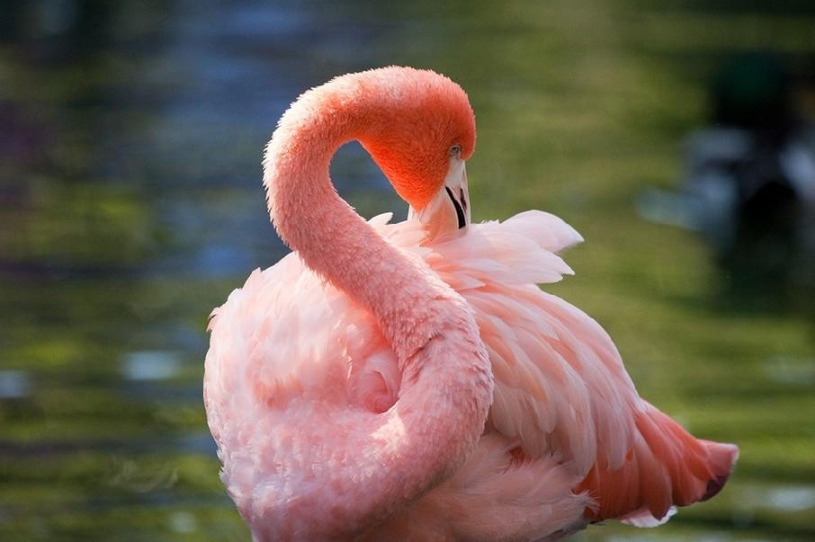 一部自然环境作品反映.彼撮影野生动物写真,风景内容多含.
