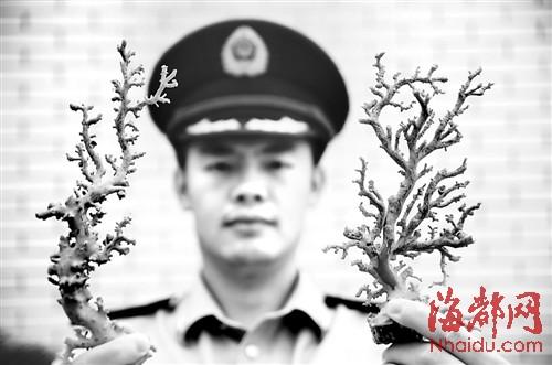 宁德民警查获的珍贵红珊瑚