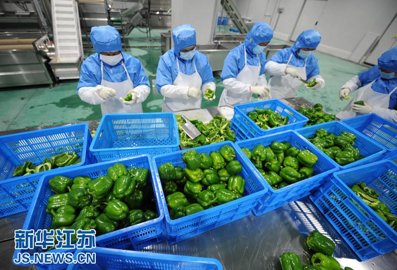 6月11日,净菜加工车间工人在进行菜椒拣切试生产.图片