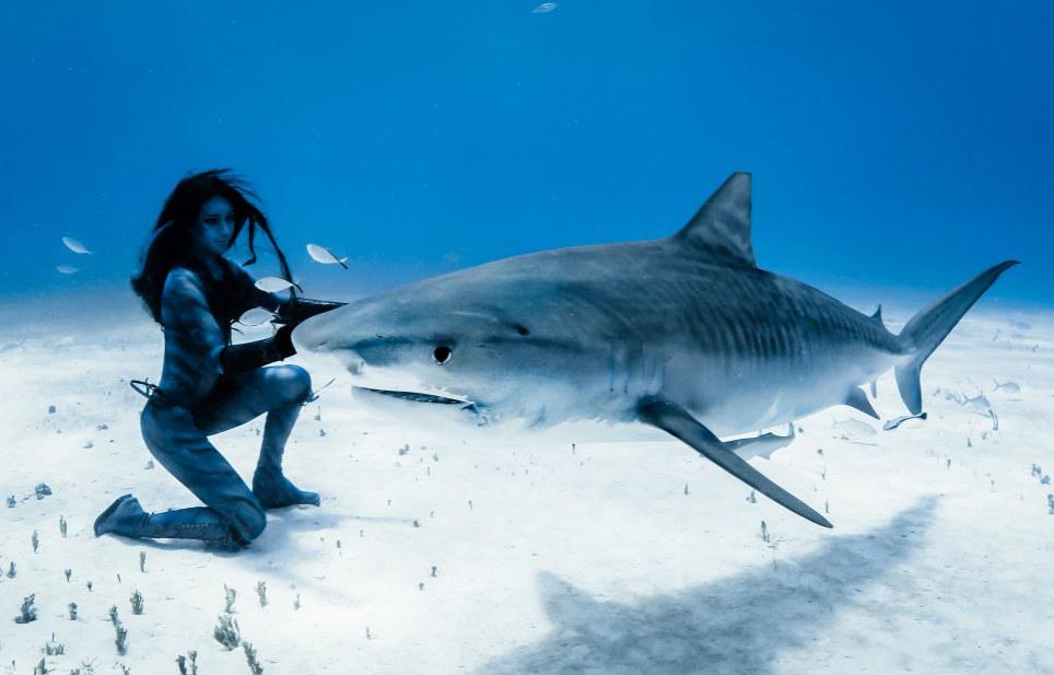 美女与虎鲨共舞 虎鲨图片大全 虎鲨观赏鱼