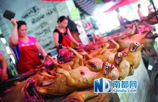 前日下午,玉林垌口市场,刚宰杀不久的狗被摆放在台面上出售。南都记者 叶志文 摄