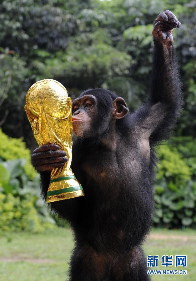 """本届巴西世界杯期间,广州长隆野生动物世界与搜狐社区合作举办了""""动物"""