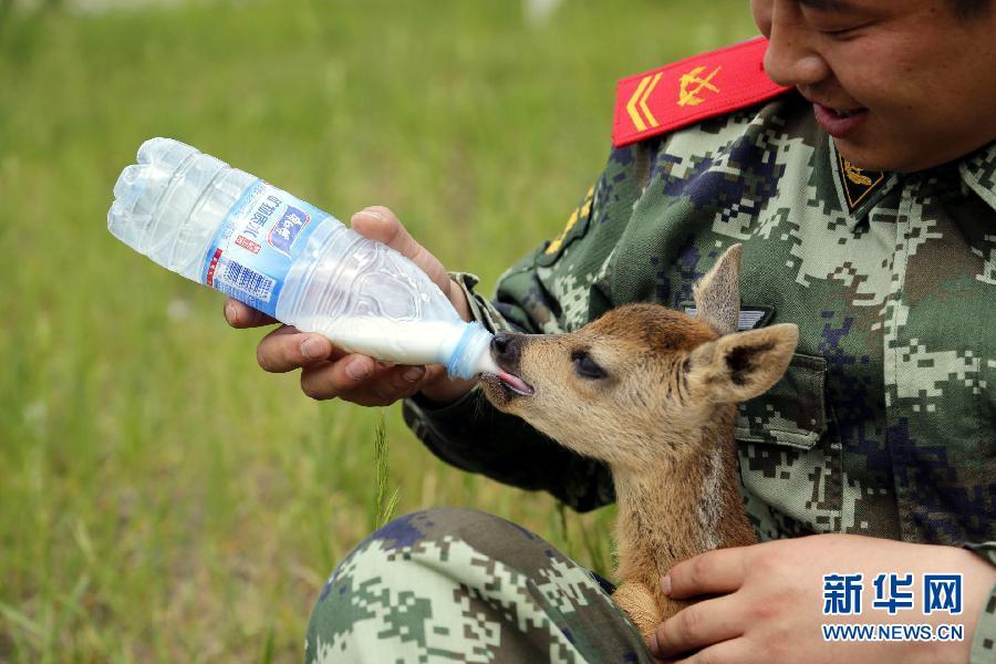 呼伦贝尔森警救助国家二级保护动物狍子(组图)