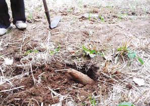 大彦南村一村民在麦田耕作时发现一枚疑似炮弹的爆炸物