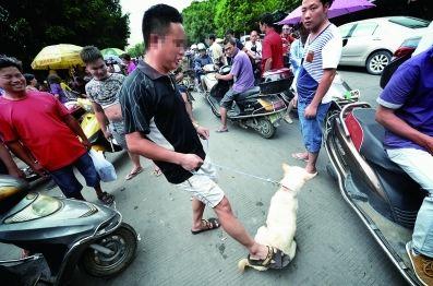 有人购买,一名没有谈好价钱的狗贩试图通过踢打狗博得高价 摄/法制晚报特派玉林记者  刘畅