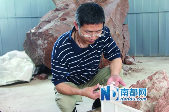 中国地质科学院地质研究所研究员吕君昌博士在研究恐龙骨骼化石。