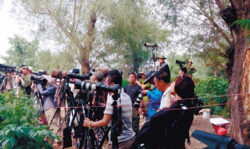 """沈阳市长白岛胜利桥下,来自四面八方的摄影爱好者摆开""""蛇形阵"""",纷纷"""