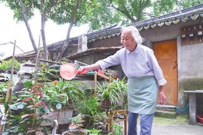 老人浇花图片