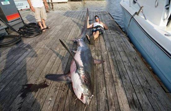 Fernandez与大白鲨合影