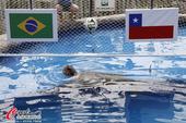 高清图:大海龟预测淘汰赛首战 巴西将战胜智利