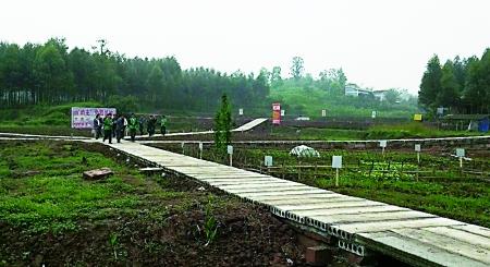 生态农场_重庆蜀都蔬菜种植股份合作社的生态追踪家庭农场