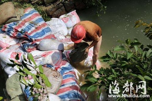几名工人将沙包填在安泰河中段