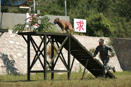 """""""汪爸""""杨烁与犬一起训练"""