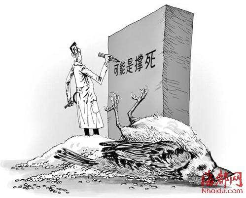 麻雀撑死_麻雀大米 - www.chudaowang.com