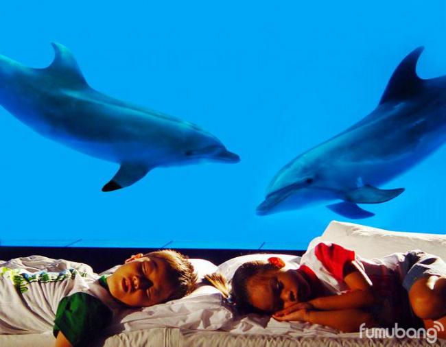 触摸池活动,diy手工,互动游戏,观看海洋科普录像,引导观察与鲨鱼共眠