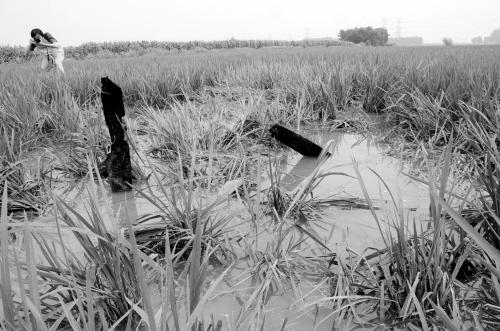 小型农用飞机昨晨坠毁沙岭镇……
