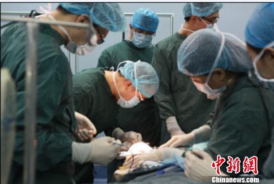8日的手术进行中。 汤妍 摄