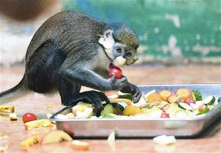 本报讯 (记者刘超)连日来暑热难耐,动物园里的动物们如何度过?