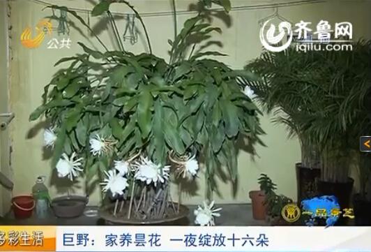 视频 菏泽 山东/视频来源:山东广播电视台新闻中心《今日报道》