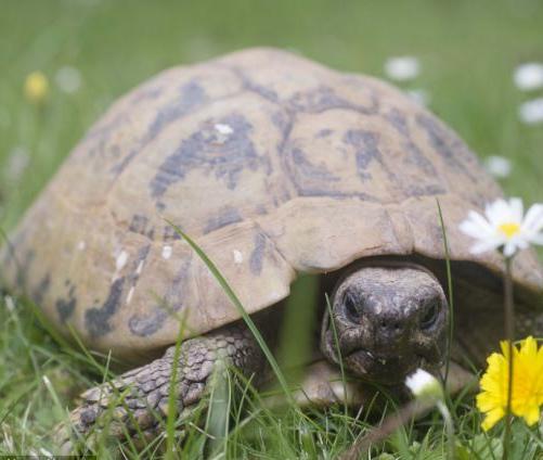 英国一乌龟已经116岁,成该国最年长宠物。