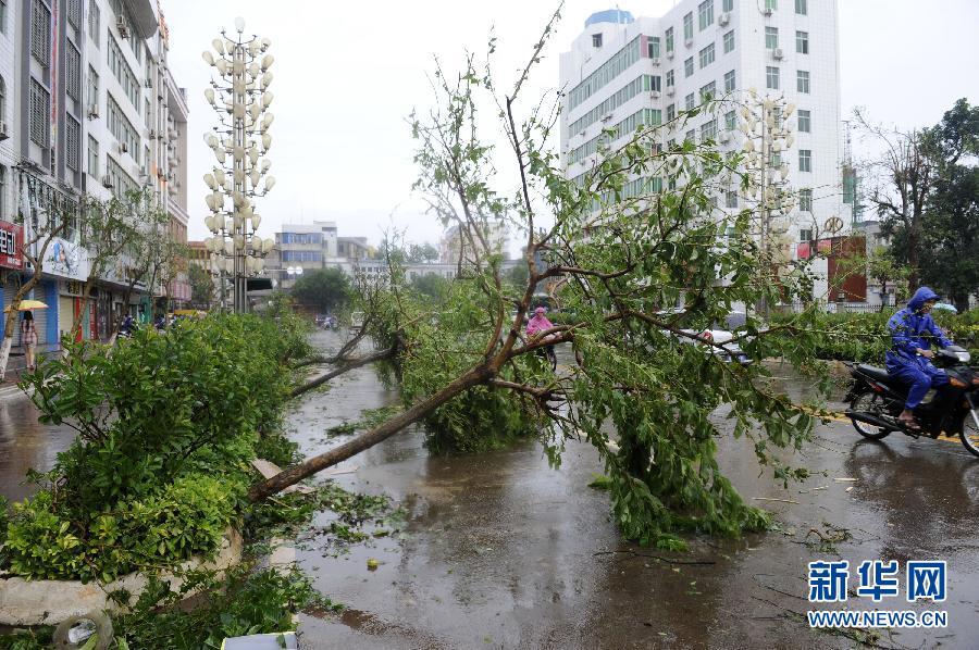 广东:超强台风威马逊重创徐闻(组图)-搜狐滚动