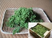 葡萄山椒:关西的初夏风味