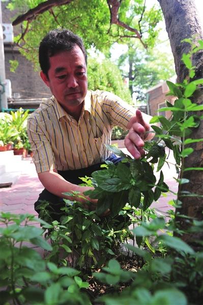 """冯少强向记者展示""""生态雨水花园""""史淞予摄"""