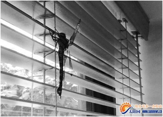 蜻蜓网络收音机pc版_20厘米长蜻蜓闯入英国民居(图)-搜狐滚动