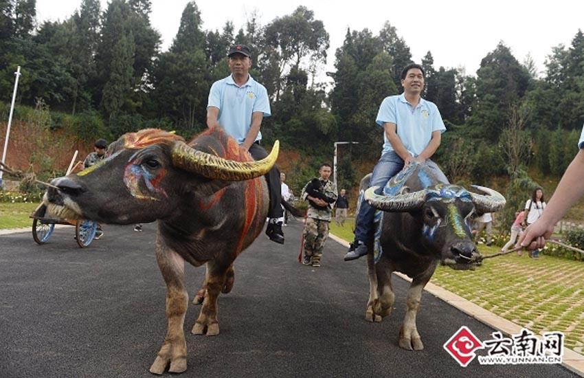 广州番禺野生动物园 野生动物园大亨3