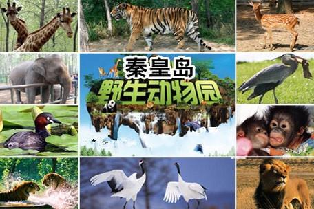 秦皇岛野生动物园好玩吗?有哪些动物?_搜狐旅游_搜狐网