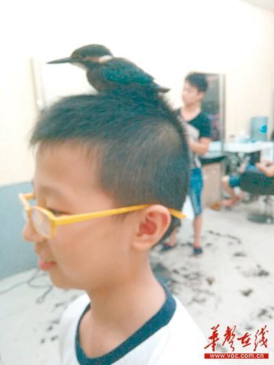 @梅子:不知这叫什么鸟,太牛了!理发店老板说是野生的,进来了就不肯走,养了好些天了。@Hi都市报