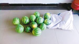 常某等人偷的西瓜(图片由合川区警方提供)