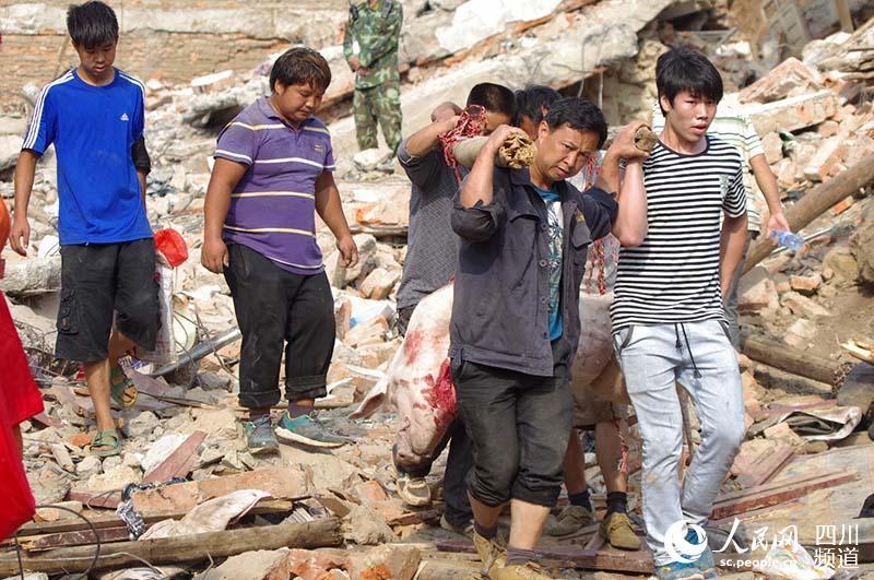 村民们自发将自己家的猪杀了送给参与救援的官兵,图为村民们抬着猪从废墟上走过。陈永斌摄