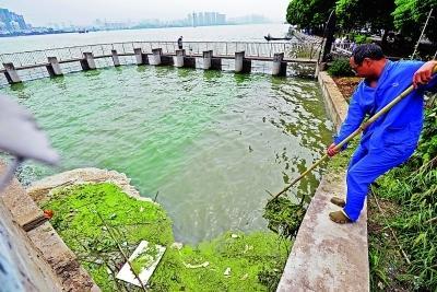 南湖水域工作人员正在打捞水面上的蓝藻、浮萍和垃圾。 图片来源:武汉晨报