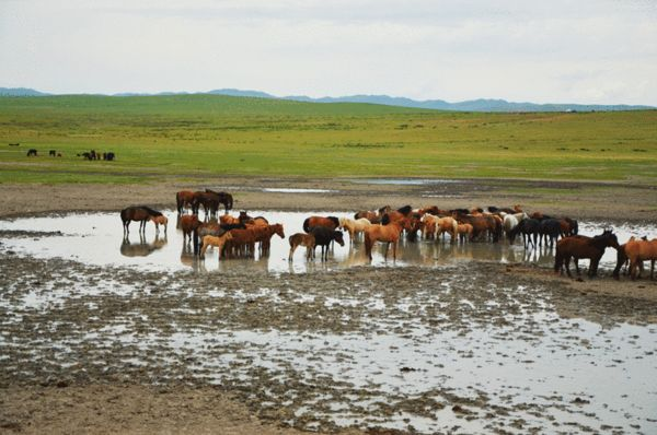 人所不知的--蒙古国图片