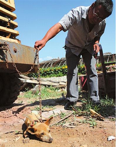 西夏区农牧局工作人员在仔细观察该动物。