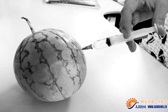 向西瓜里注射甜蜜素十分困难。记者 于婧媛 摄