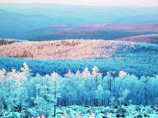 内蒙古 研究在内蒙古大兴安岭林区开展国有林区综合配套改革试验