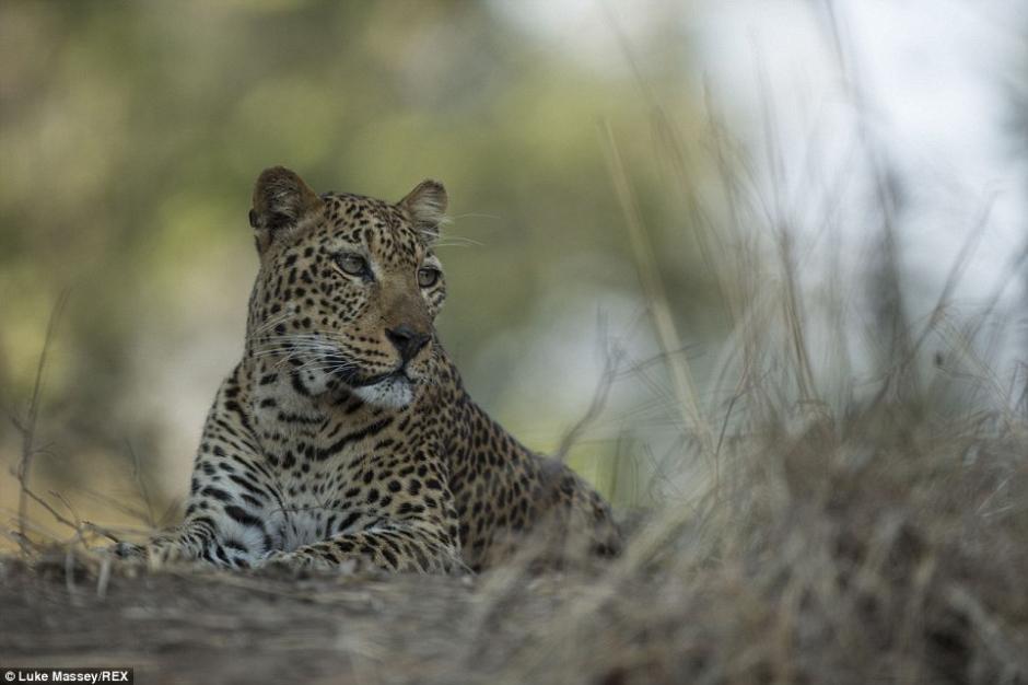 野性非洲:摄影师追踪野生动物3个月