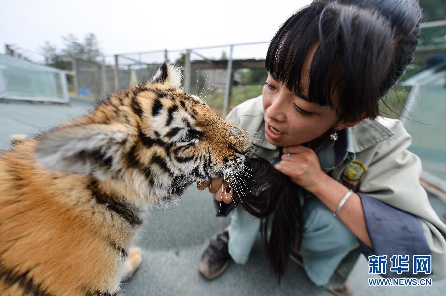 今年24岁的女孩刘莉是青海青藏高原野生动物园的一名饲养员.鲸鱼属于哺乳动物图片