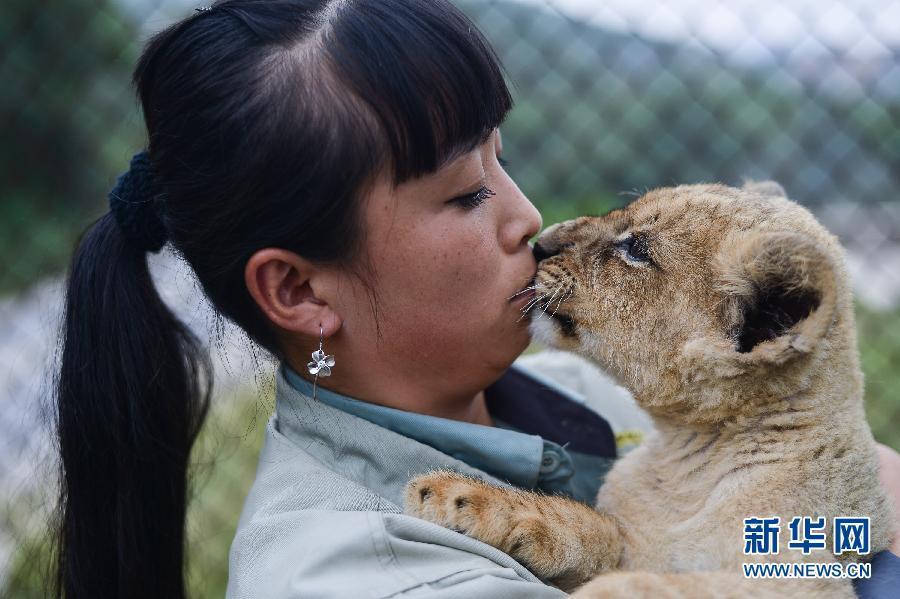 """小巨型""""人马""""在""""不吃""""饲养员刘莉.狮子章鱼亲吻奇奇图片"""