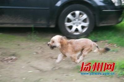市民盼抓捕流浪犬 警方呼吁不要自行喂养流浪犬(图)