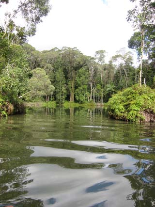 隐匿的热带雨林