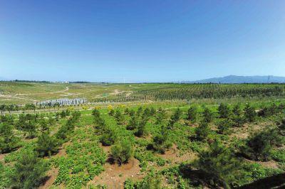 怀柔区潮白河畔,昔日的沙地经过改造变为绿植覆盖区域。京华时报(微博)记者徐晓帆摄