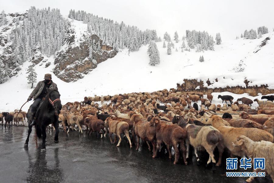 新疆哈密金秋时节突降大雪
