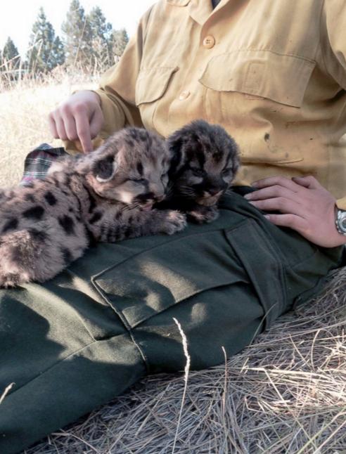 美国消防员从火场救出的小狮崽。