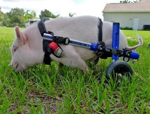 动物世界单纯美好:外媒评点不可思议的动物图片