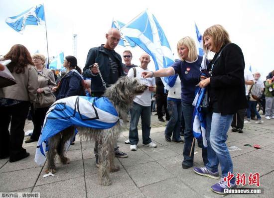 """400万苏格兰人公投走""""独立之路"""" 英国或一夜变天"""