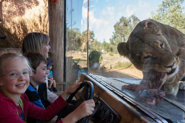 澳洲维多利亚保育动物园与亚澳营销策划携手合作